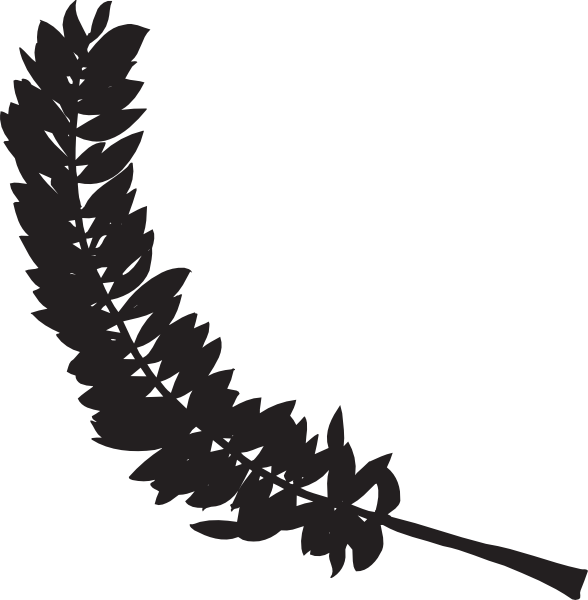 588x600 Feather Silhouette Clip Art