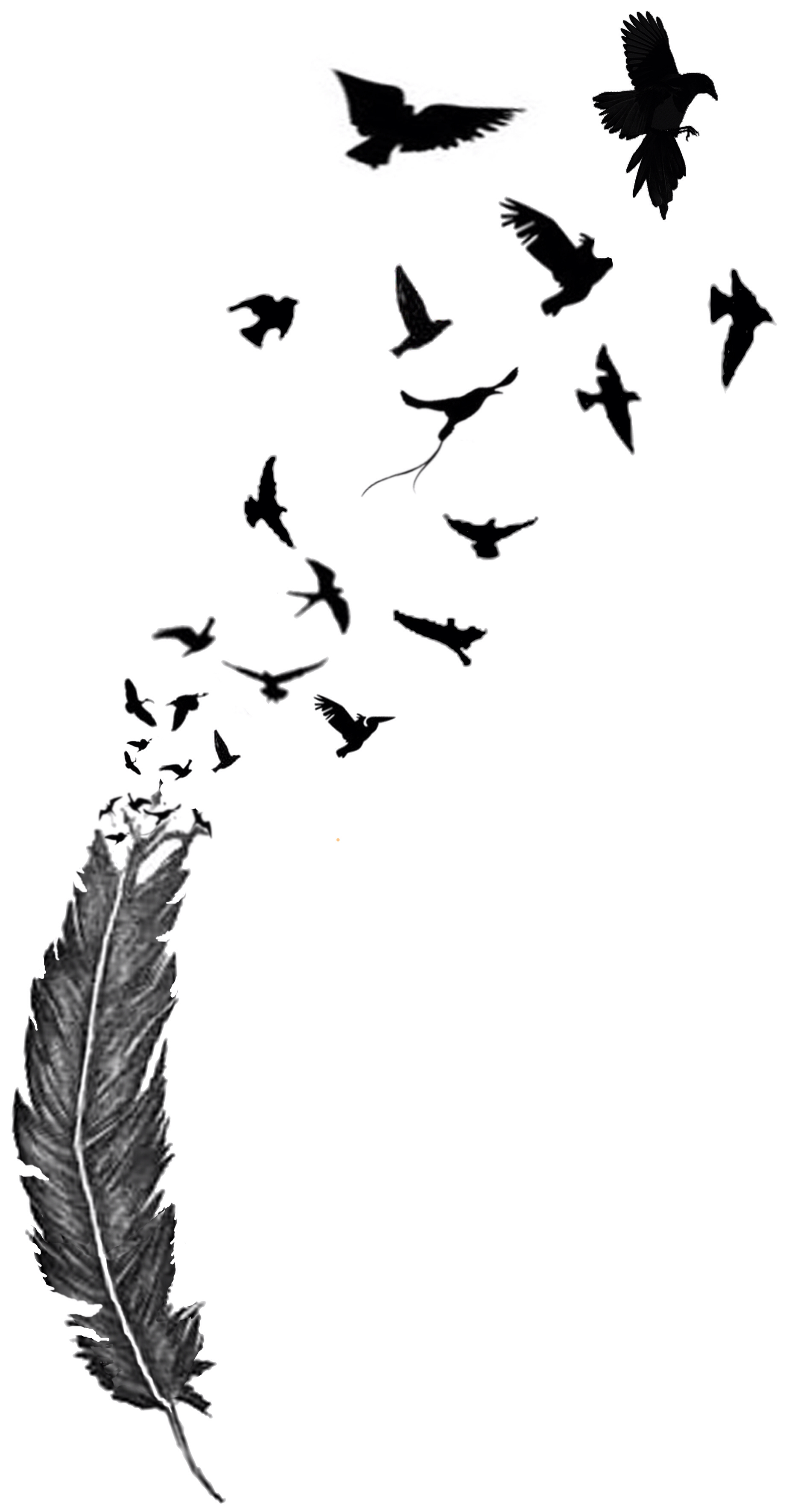 1841x3543 Birds Of A Feather Art Feathers, Bird And Tattoo