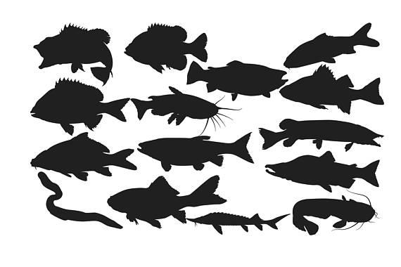 570x380 Fresh Water Fish Silhouette, Fish Clipart, Fish Silhouette
