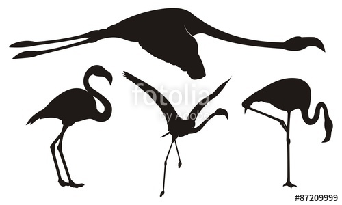 500x300 Flamingo Silhouette Stock Image And Royalty Free Vector Files