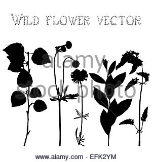 300x320 Set Black Silhouettes Of Wild Flowers And Leaves Illustration