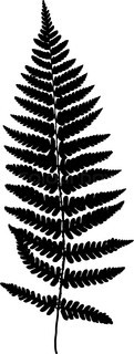 121x320 Fern Frond Black Silhouette. Vector Illustration. Forest Concept