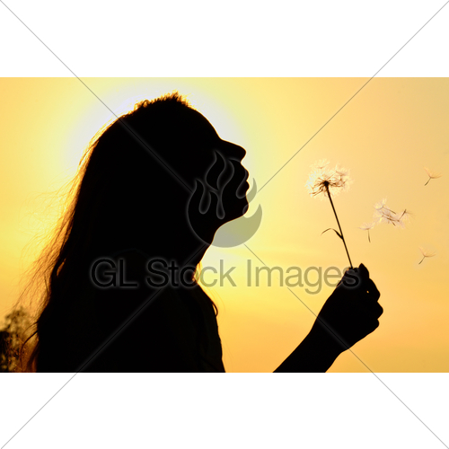500x500 Silhouette Of Girl Blowing To Dandelion Gl Stock Images