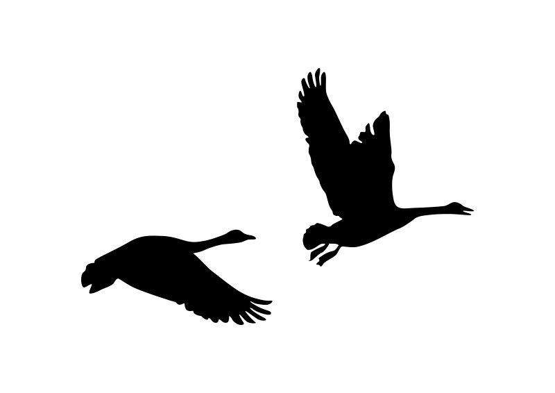 800x566 Of Flying Geese Silhouette