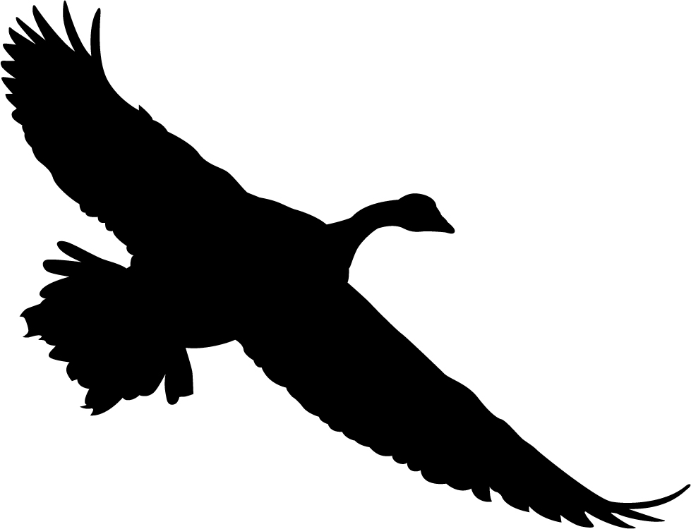 979x750 Canada Goose Wall Decal