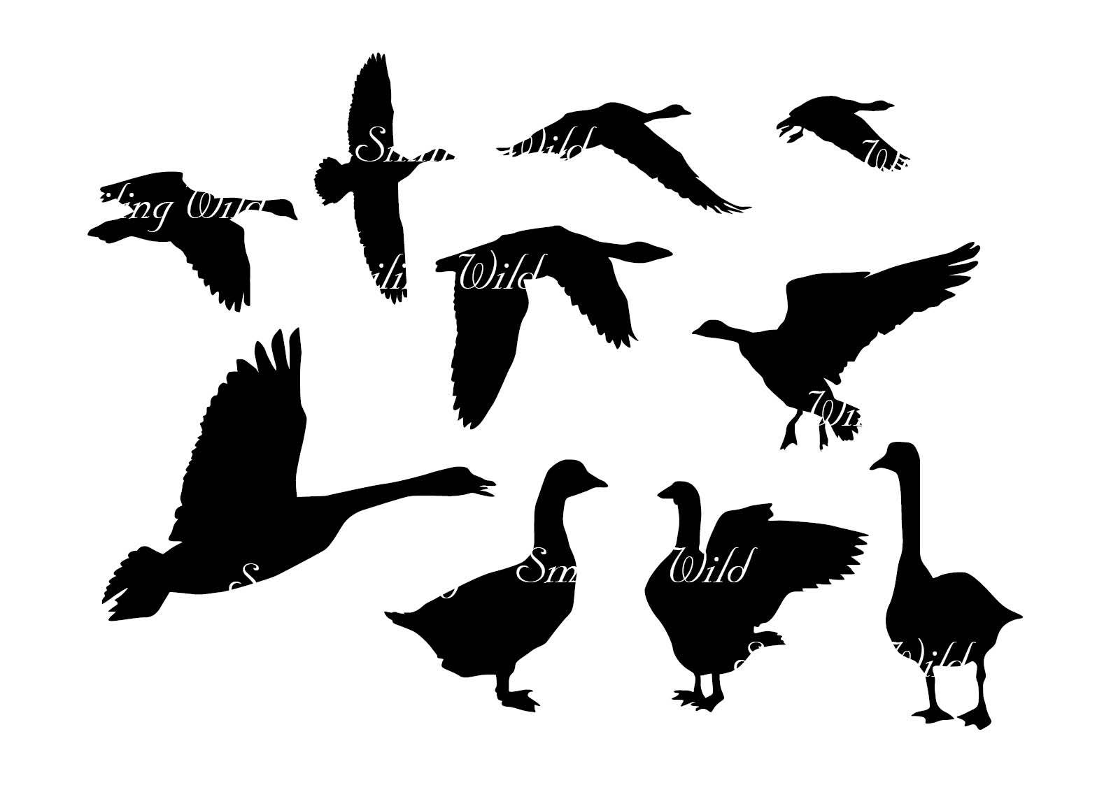 1588x1123 Goose Svg Geese Silhouette Clipart Cutout Printable Waterfowl