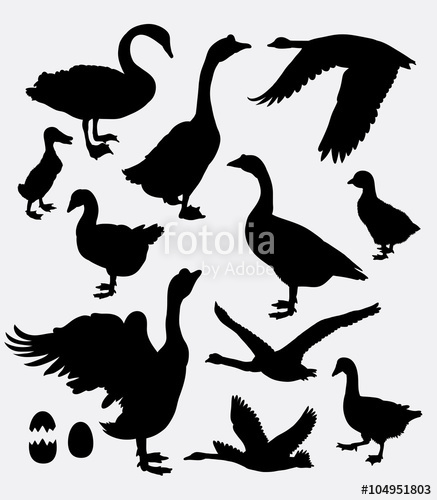437x500 Duck, Swan, Goose, Poultry Activity Silhouette. Good Use For Game