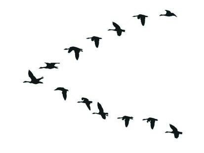 413x310 Flock Of Birds Clipart Goose
