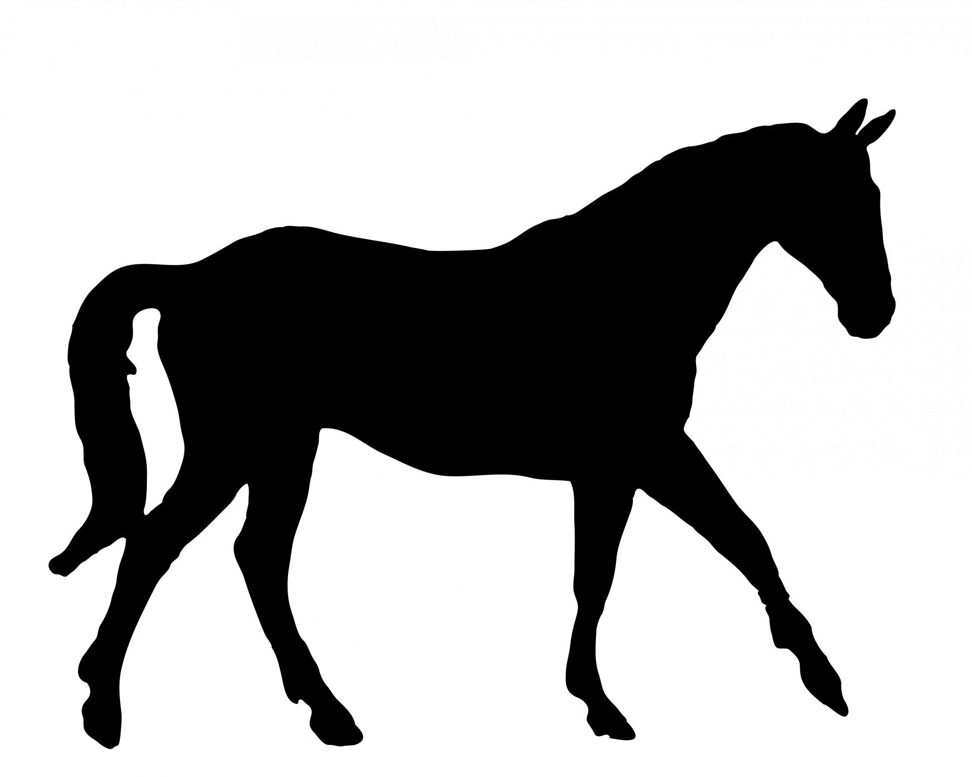 1920x1536 Horse Black Silhouette Free Stock Photo