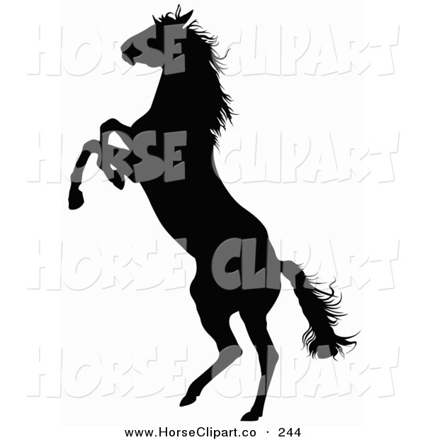 600x620 Rearing Horse Clipart