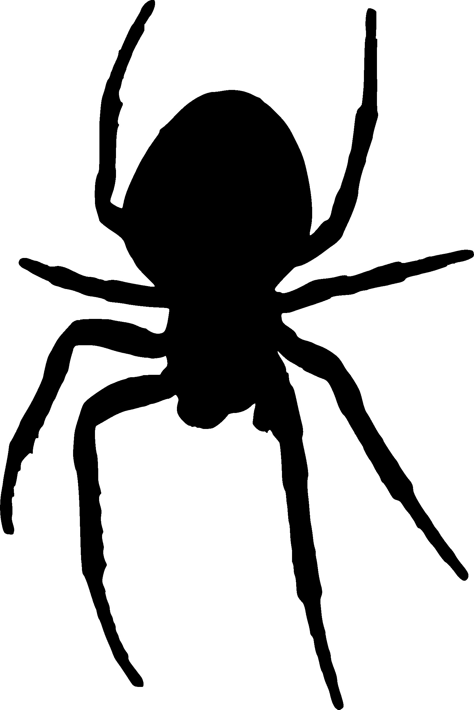 1602x2400 Spider Insect Black Silhouette Animal Vector Illustrator Stock
