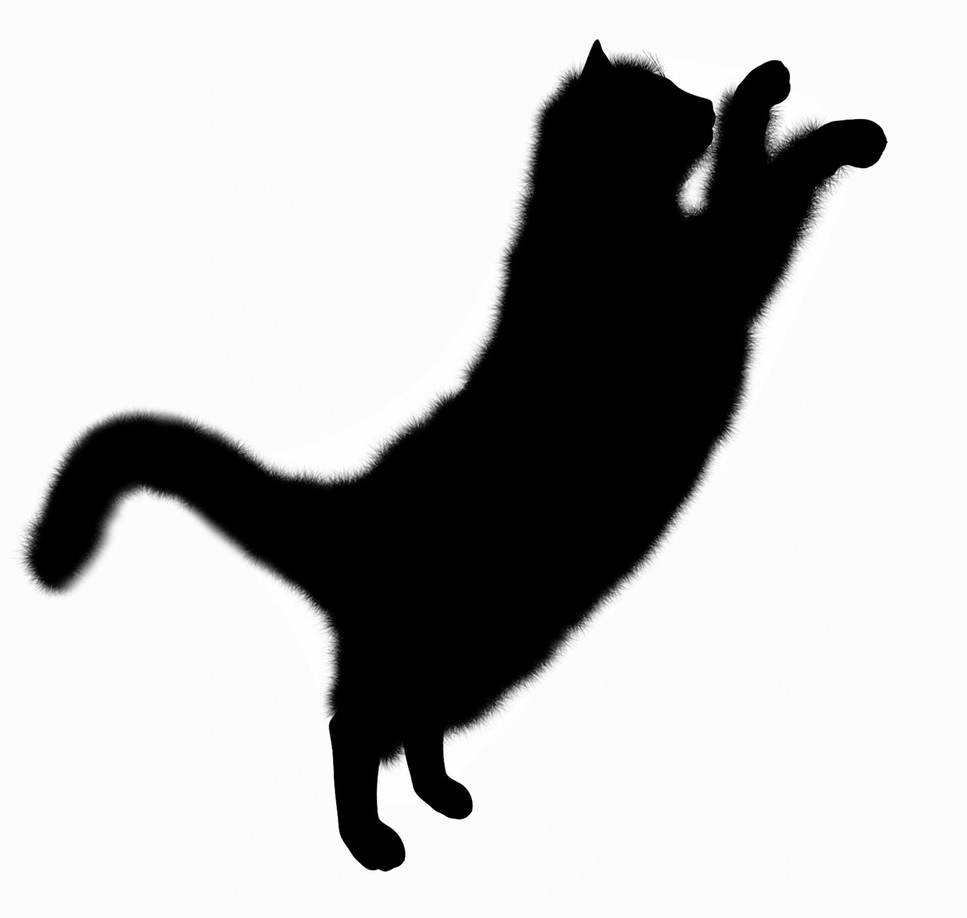 1920x1824 Silhouette Cat Free Stock Photo