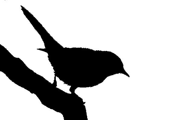 600x399 Spanish Bird Silhouettes
