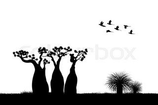 320x213 Australian Landscape. Black Silhouette Of Emu Ostrich On White