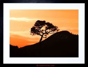 300x229 Photo Landscape Sunrise New Zealand Kauri Tree Silhouette Framed