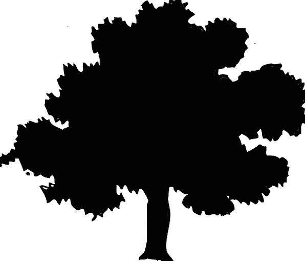 596x509 Tree, Sapling, Landscapes, Outline, Nature, Forest, Woodland
