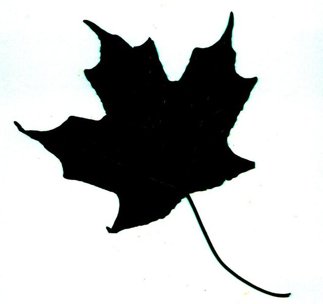640x601 Learning To Identify Trees Let These Leaf Silhouettes Make It