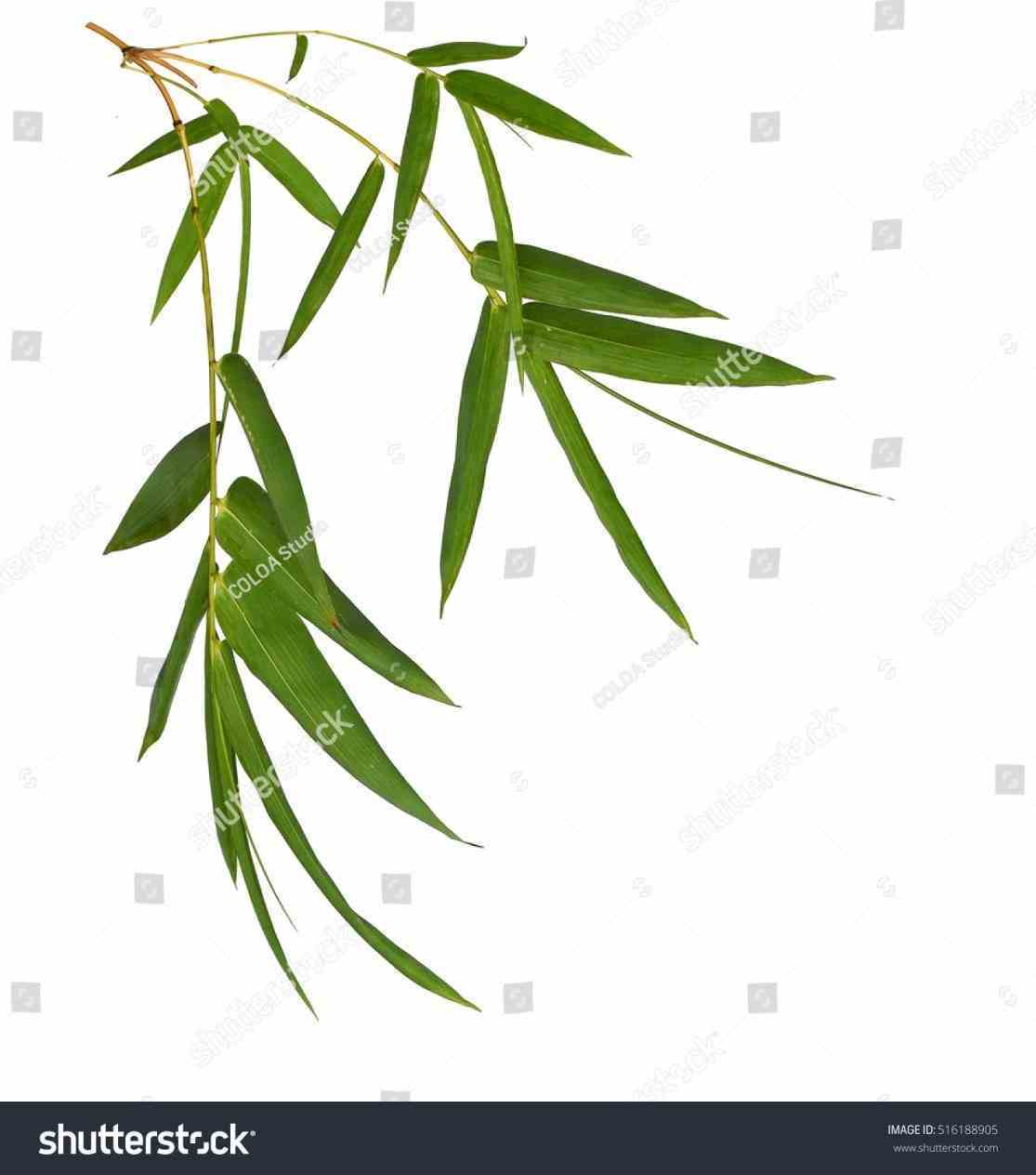 1115x1264 Bamboo Leaves Clip Art 2018