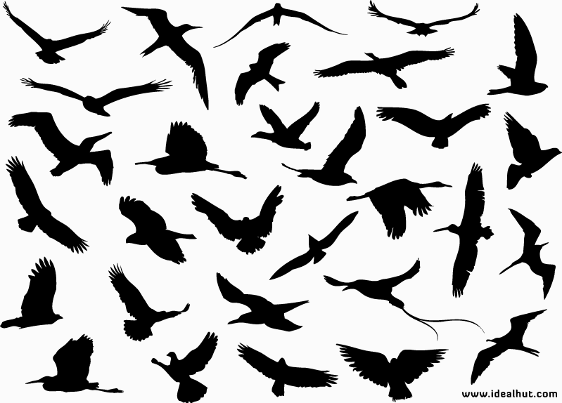 799x574 Image Detail For Flying Birds Vector Silhouettes Qvectors Free