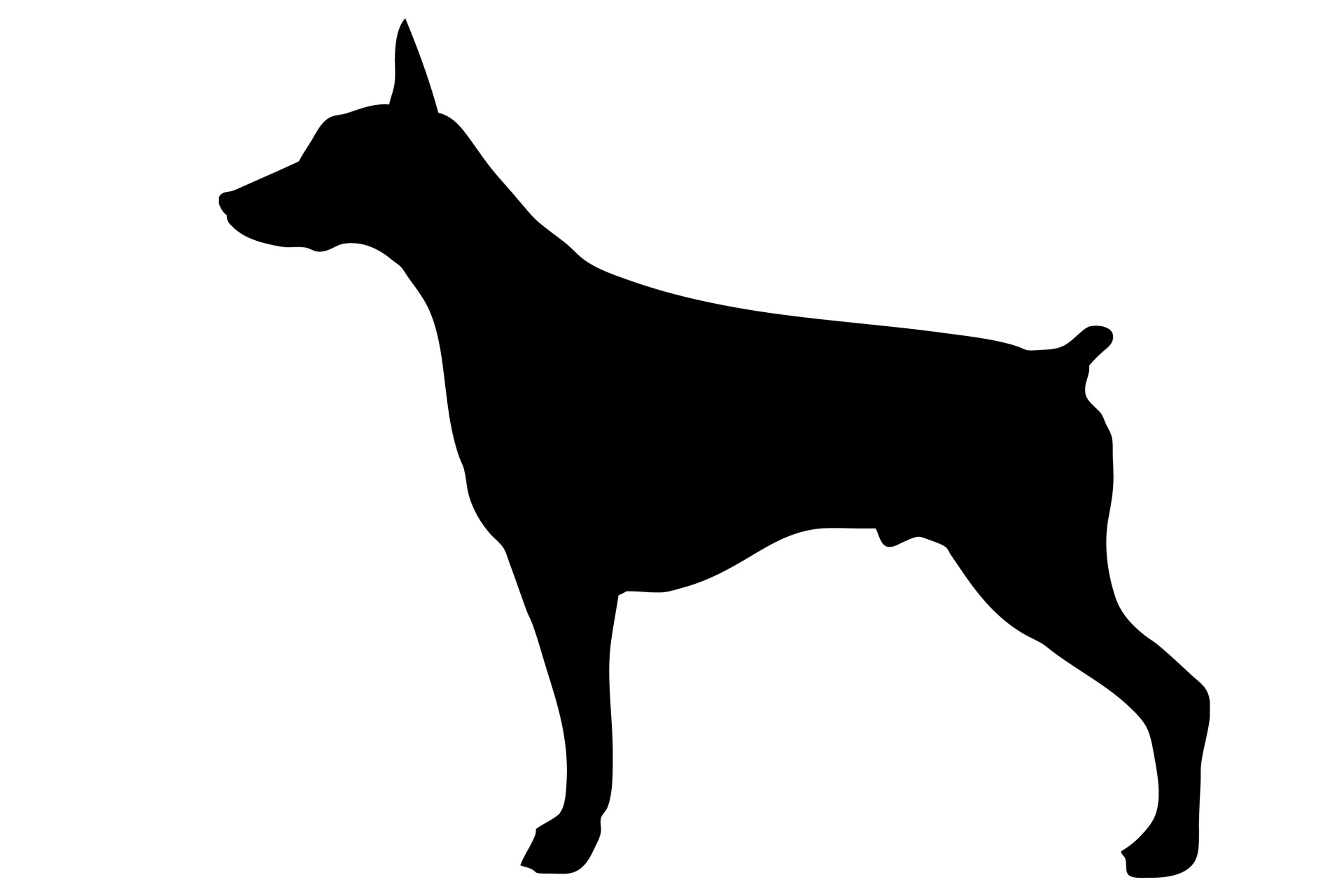 1920x1280 Dog, Doberman Black Silhouette Free Stock Photo