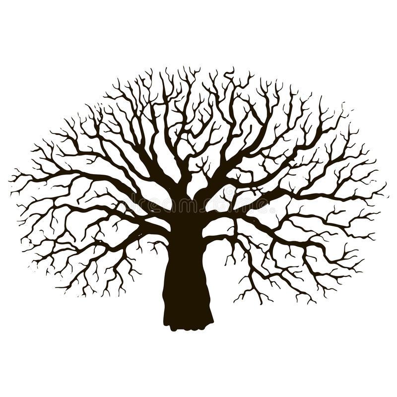 Silhouette Oak Tree At Getdrawings Com