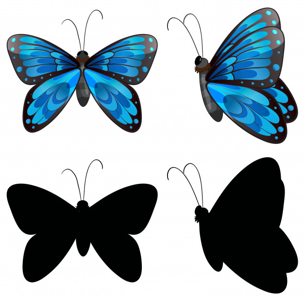 626x615 Silhouette Butterfly In Two Positions Vector Premium Download