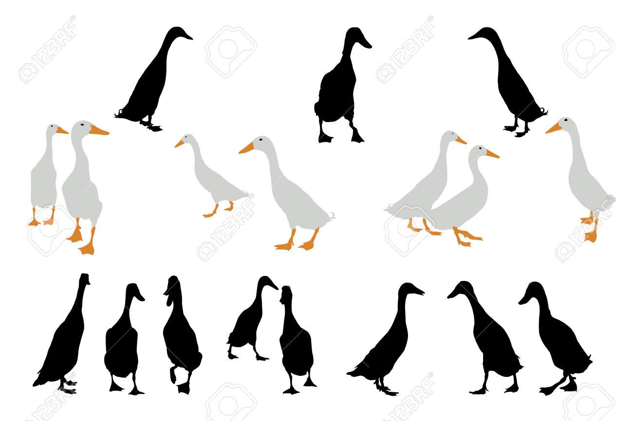 1300x866 Indian Duck Clipart
