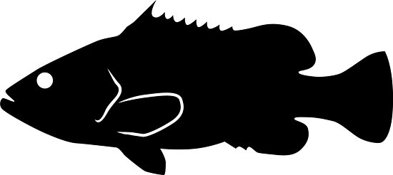 550x246 Warsaw Grouper Fish Silhouette (Black) Photographic Prints By