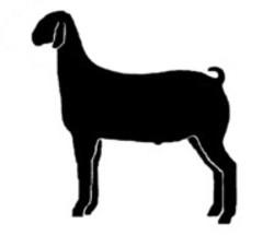 250x215 Show Goat Clipart