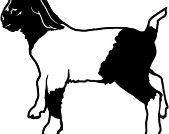 340x270 Show Goat Decal Etsy