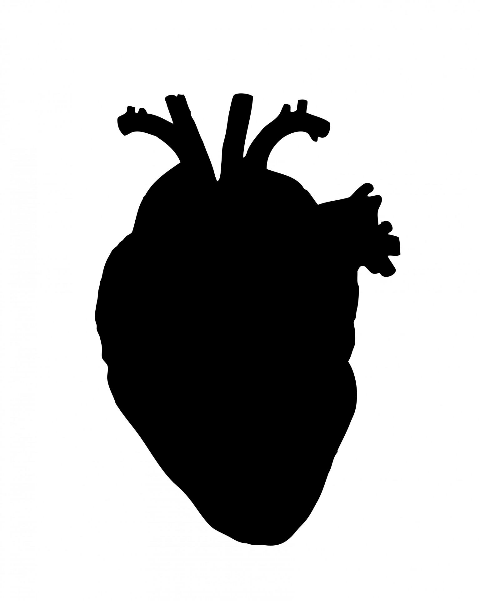1536x1920 Human Heart Free Stock Photo