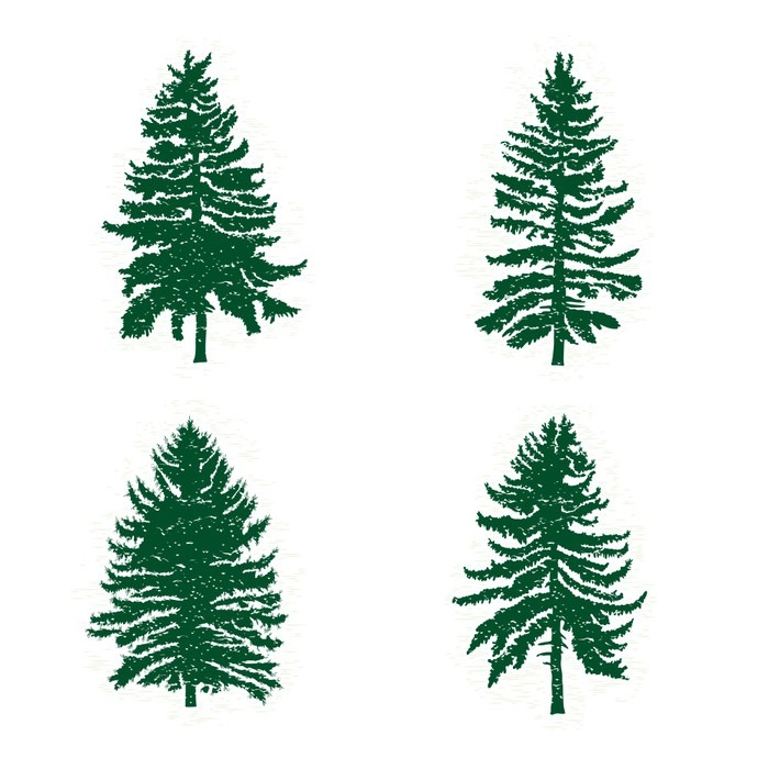 700x700 Set Of Different Silhouettes Of Green Pine Trees, Vector