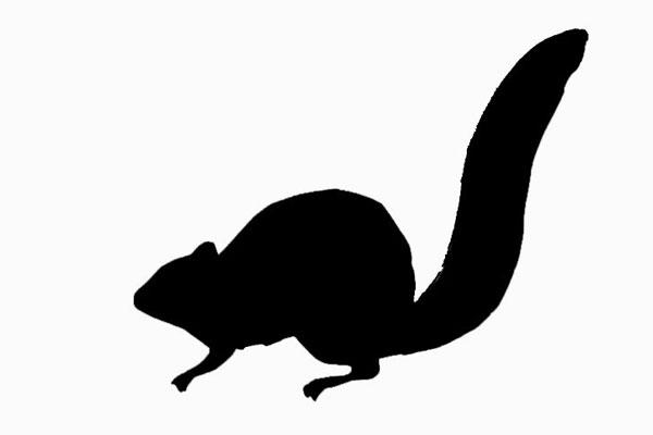 600x400 Douglas Squirrel Facts