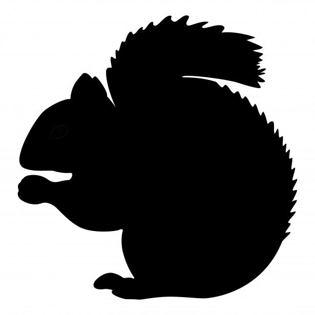 615x615 Grey Squirrel Free Stock Photo