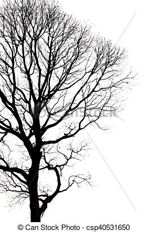 300x470 Silhouettes Of Dead Tree Without Leaves Stock Images