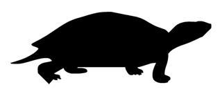 320x139 Turtle Silhouette 1 Decal Sticker