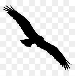 260x261 Eagle Silhouette, Eagle, Seagull, Sketch Png Image And Clipart