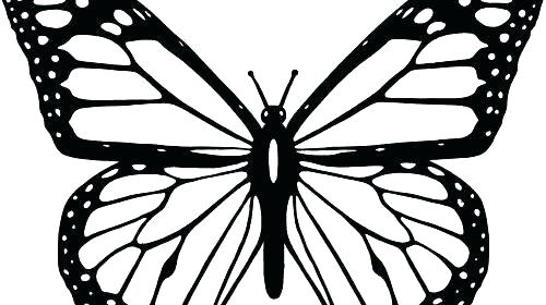 500x280 Outline Butterfly