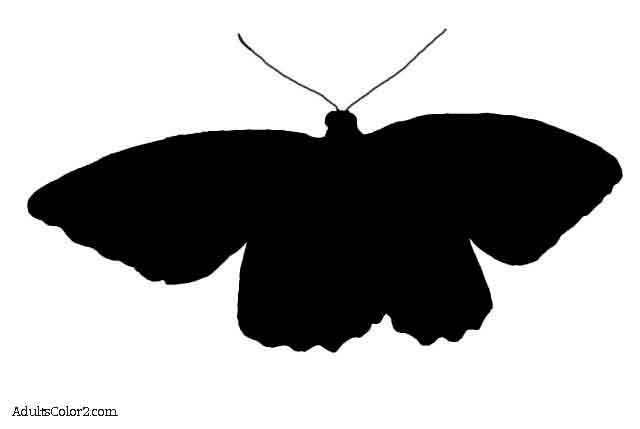 640x429 Butterfly Outline Or Silhouette Basic Butterfly Shapes
