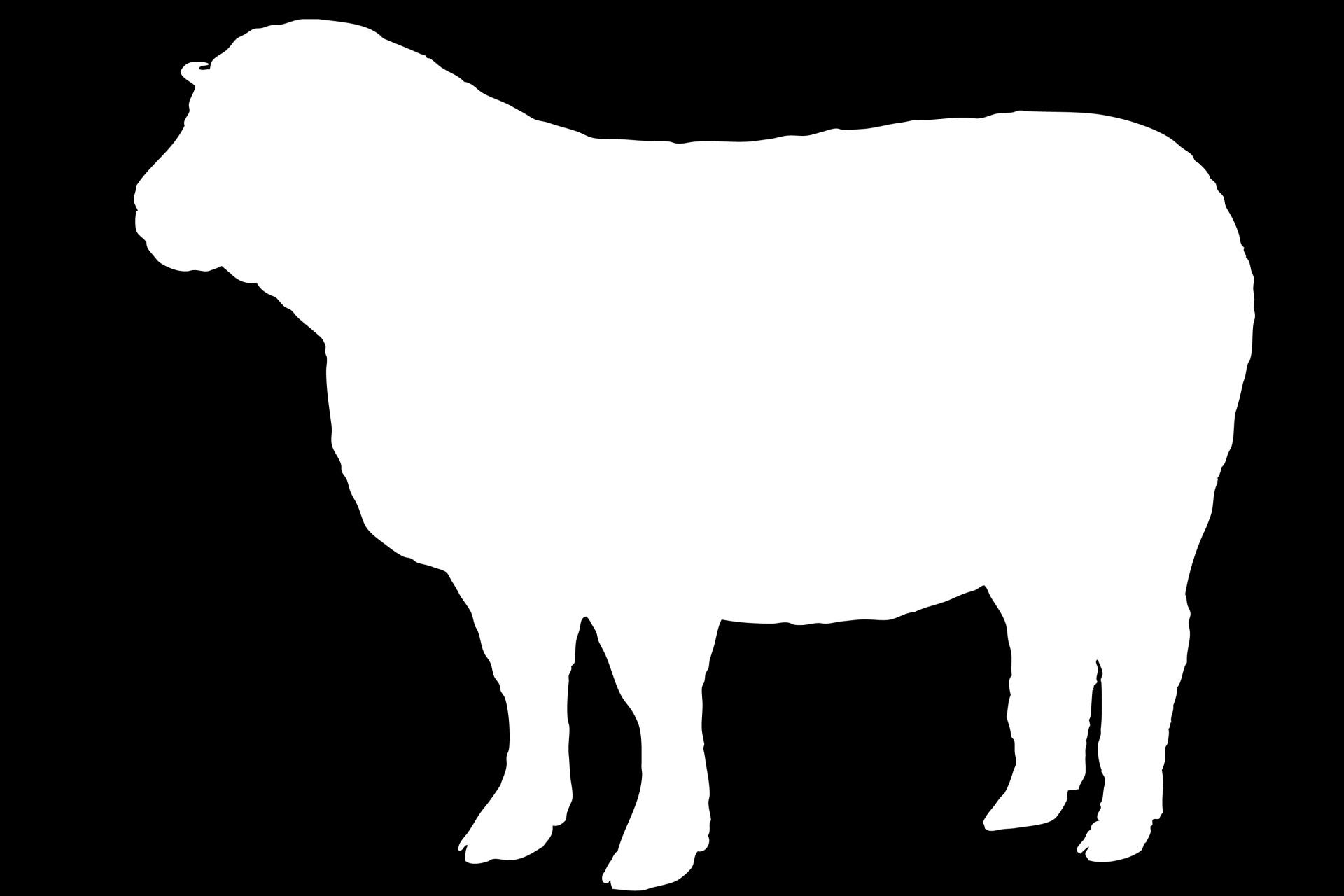 1920x1280 Sheep White Silhouette Free Stock Photo