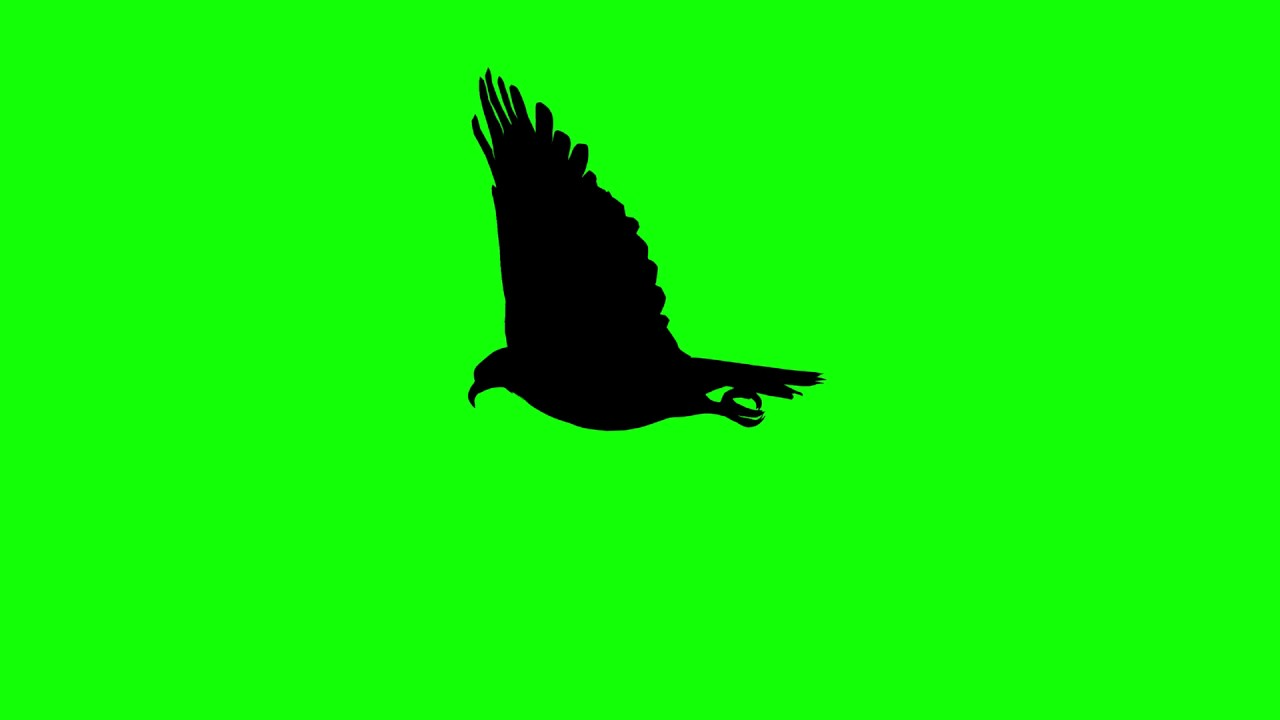1280x720 Free Hd Video Backgrounds Animal Silhouette Eagle Glide And Fly