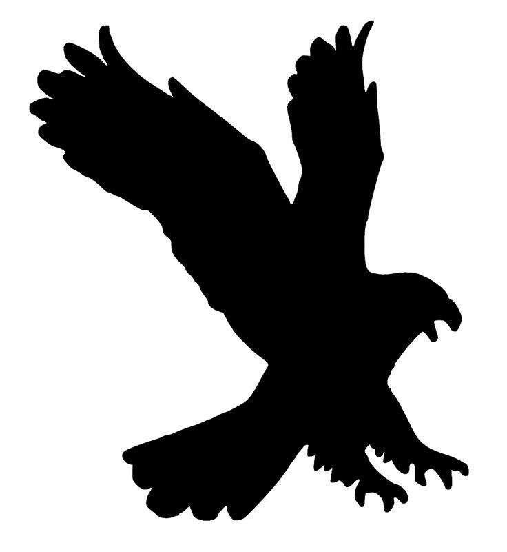 736x800 Drawn White Tailed Eagle Silhouette