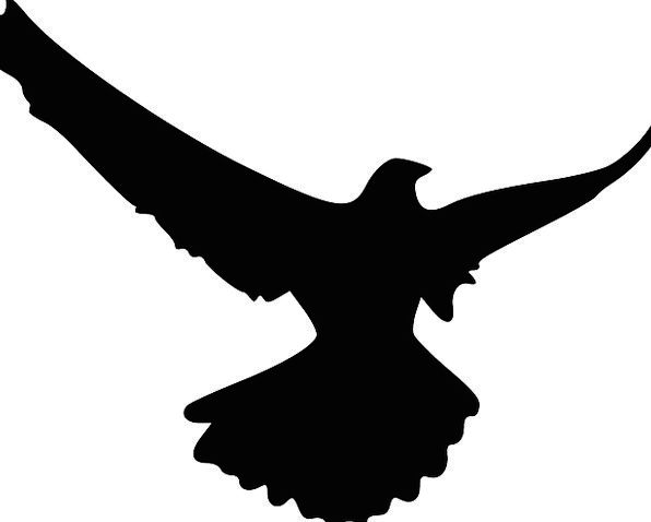 596x478 Eagle, Fowl, Animal, Physical, Bird, Flying, Hovering, Silhouette