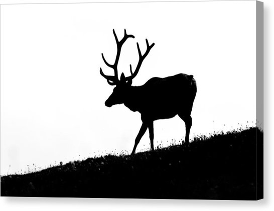 546x422 Elk Silhouette Photograph By Mark Little