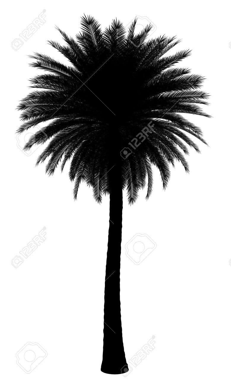 779x1300 Incredible Silhouette Of Canary Island Date Palm Tree Isolated