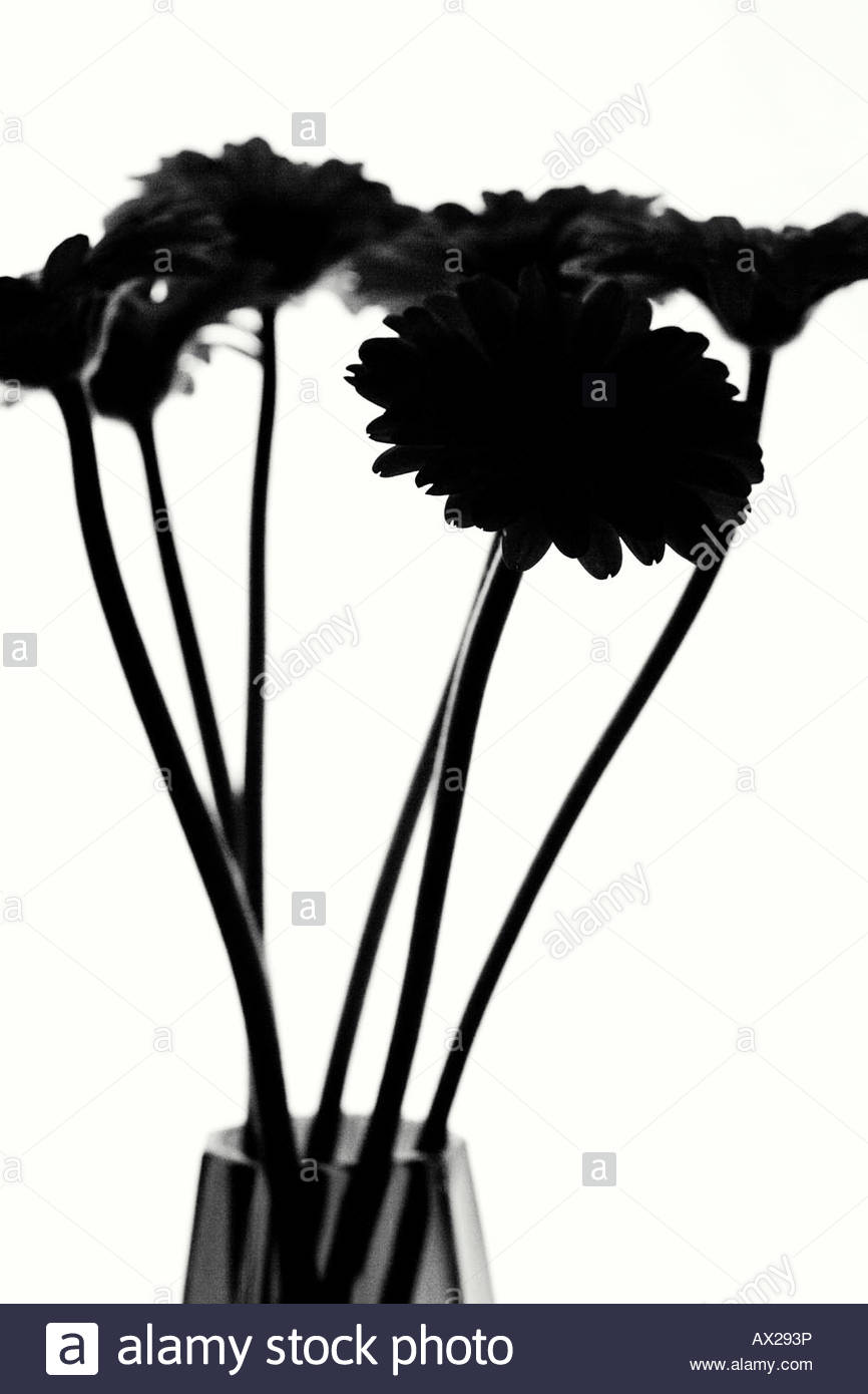 866x1390 Silhouette Flowers Stock Photos Amp Silhouette Flowers Stock Images