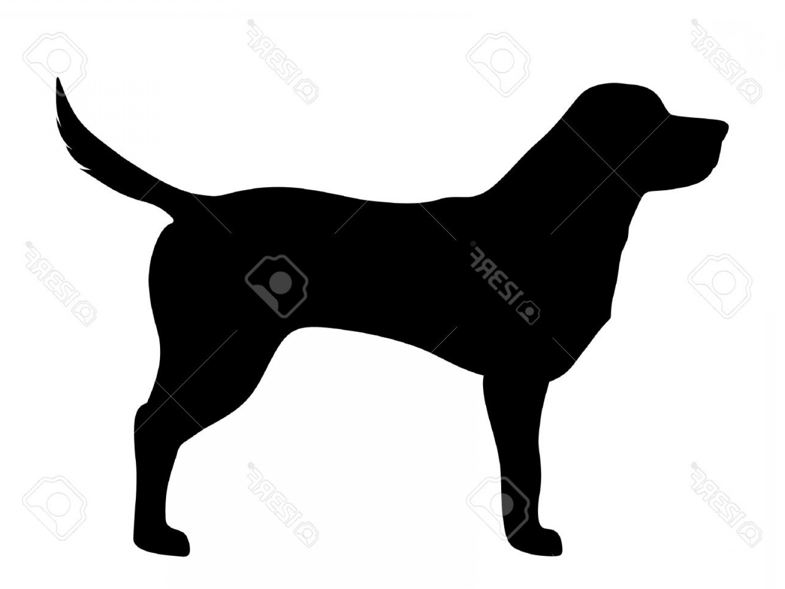 1560x1170 Vector Outline Of Golden Retriever Arenawp