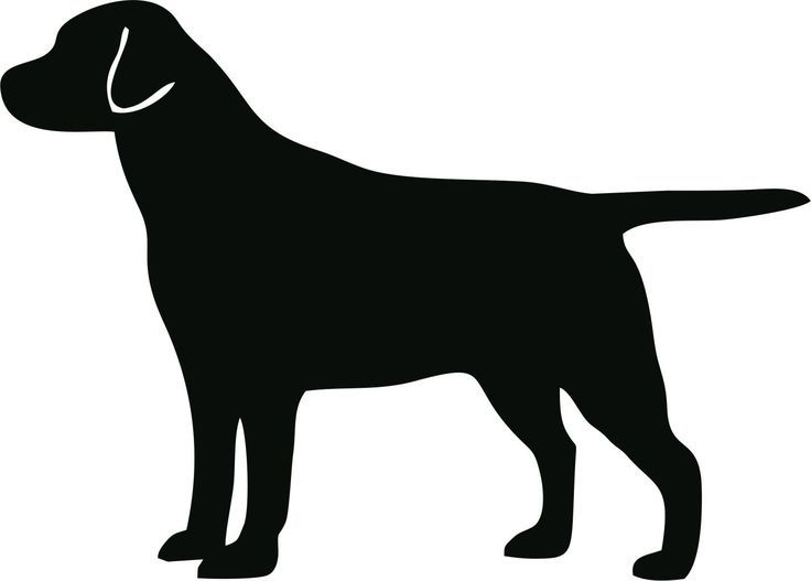 736x527 Golden Retriever Clipart Silhouette 3572856
