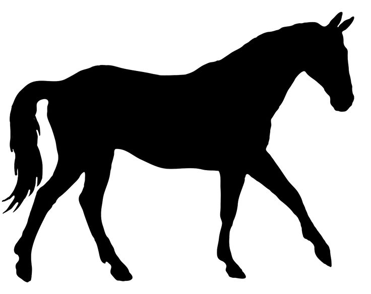 736x584 8 Best Horse Stuff Images On Horse Silhouette, Horses