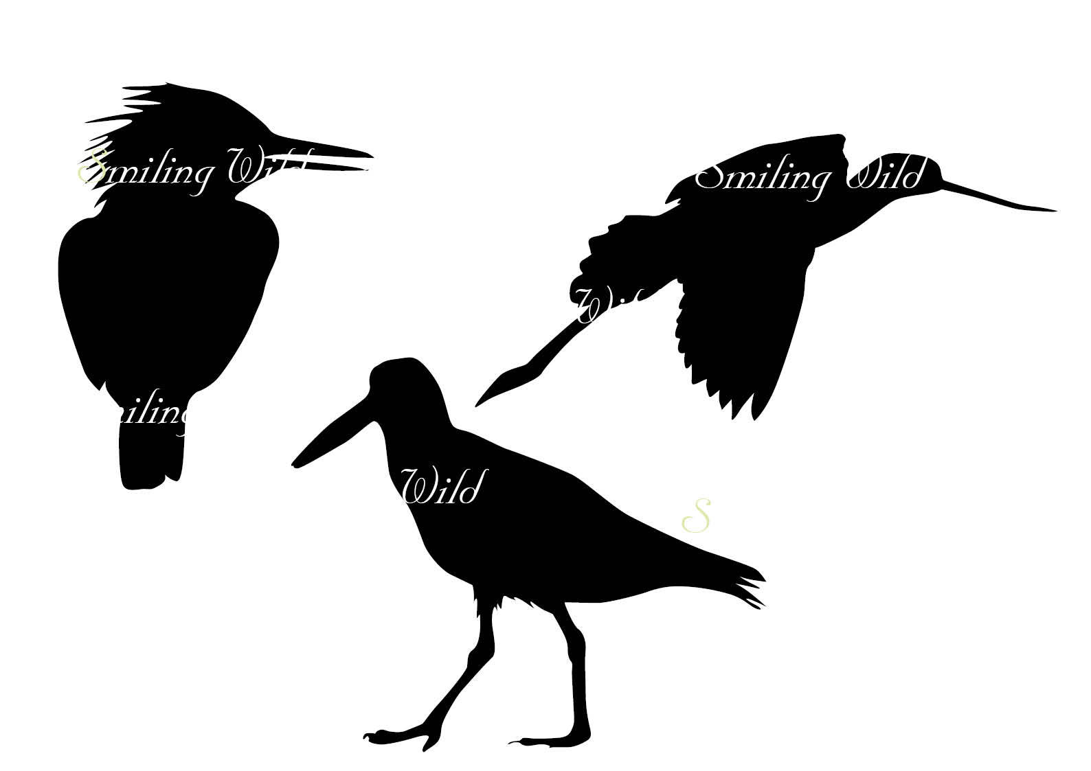 1588x1123 bird silhouette North America bird svg cutout png vector graphic